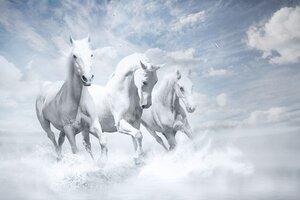 White Horses HD Wallpaper