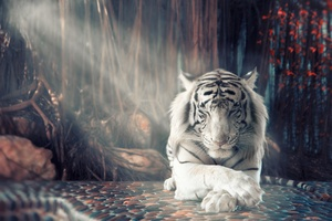 White Tiger Dreamy