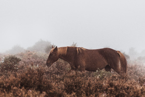 Wild Horse 5k Wallpaper