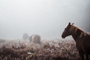Wild Horse 8k Wallpaper