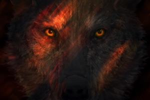 Wild Wolf Eyes Wallpaper
