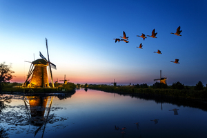 Windmill Birds Flying Evening Lake 4k