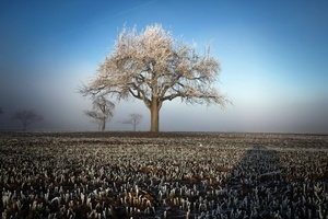 Winter Field Landscape Trees Wallpaper