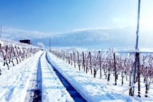 Winter Land Wallpaper