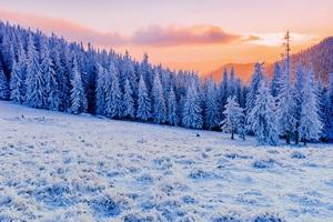Winter Mist Sunlight Clod Hills Forest 5k Wallpaper