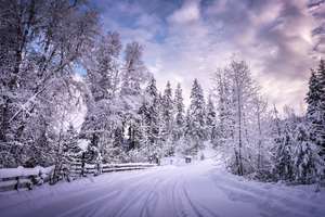 Winter Road Snow Trees White Wallpaper