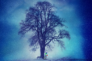 Winter Snow Cold Tree 5k