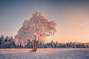 Winter Snow Trees Wallpaper