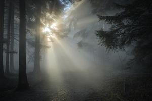Winter Sunbeam