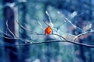 Winter Tree Leaf