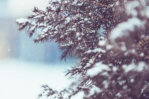 Winter Tree Snow 5k Wallpaper