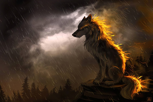 Wolf In Soothing Rain 4k Wallpaper