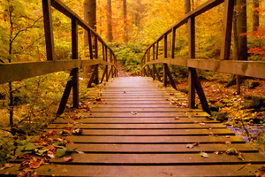 Wooden Bridge Forest Autumn Leaves