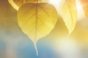 Yellow Leaf Macro