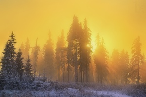 Yellow Sky Sunbeam Sunrise Trees Winter Season Wallpaper