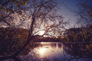 Yellow Trees Evening Dawn Lake Nature 5k