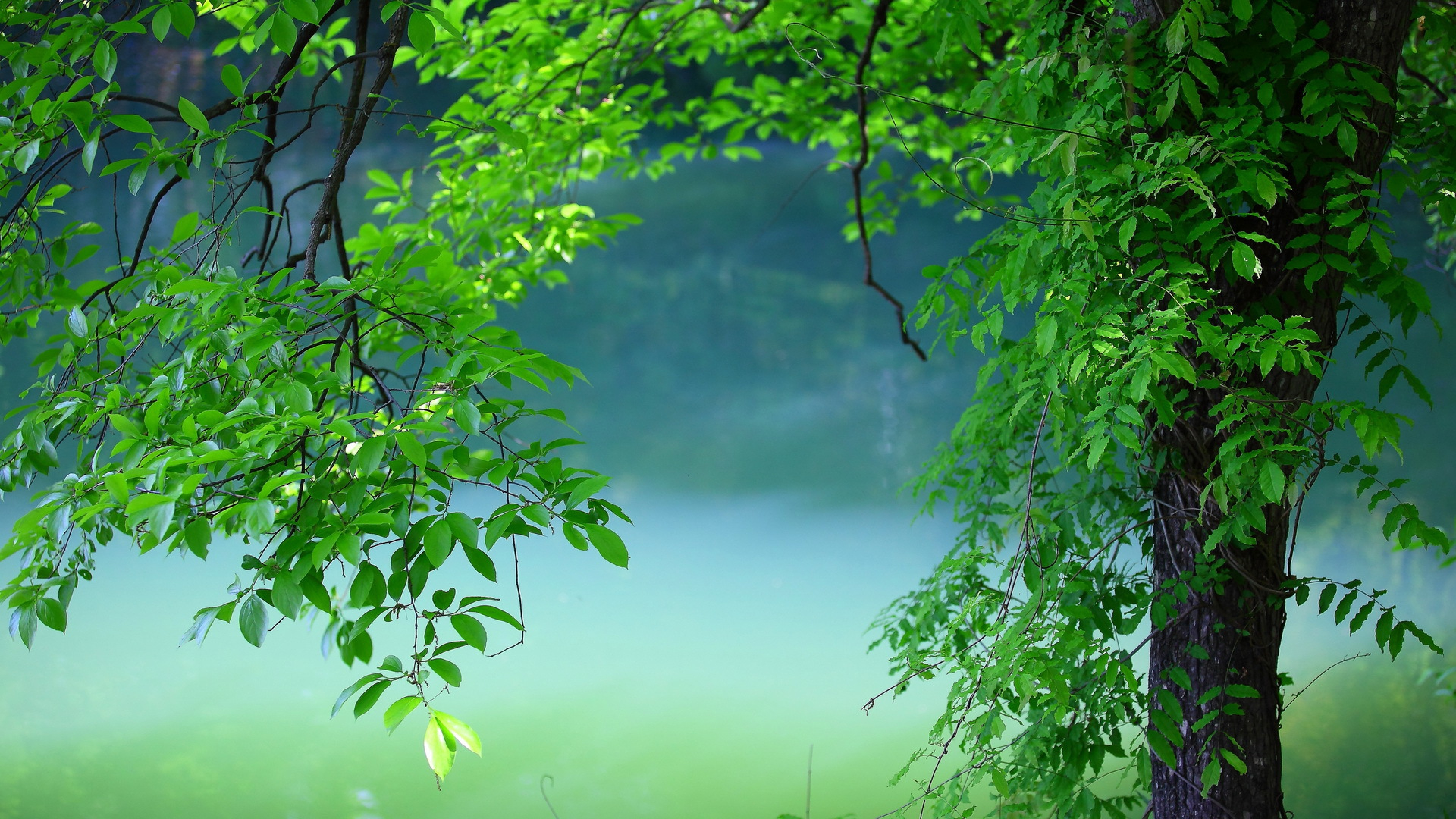 1920x1080 Tree Leaves Summer Laptop Full Hd 1080p Hd 4k Wallpapers Images Backgrounds Photos And Pictures