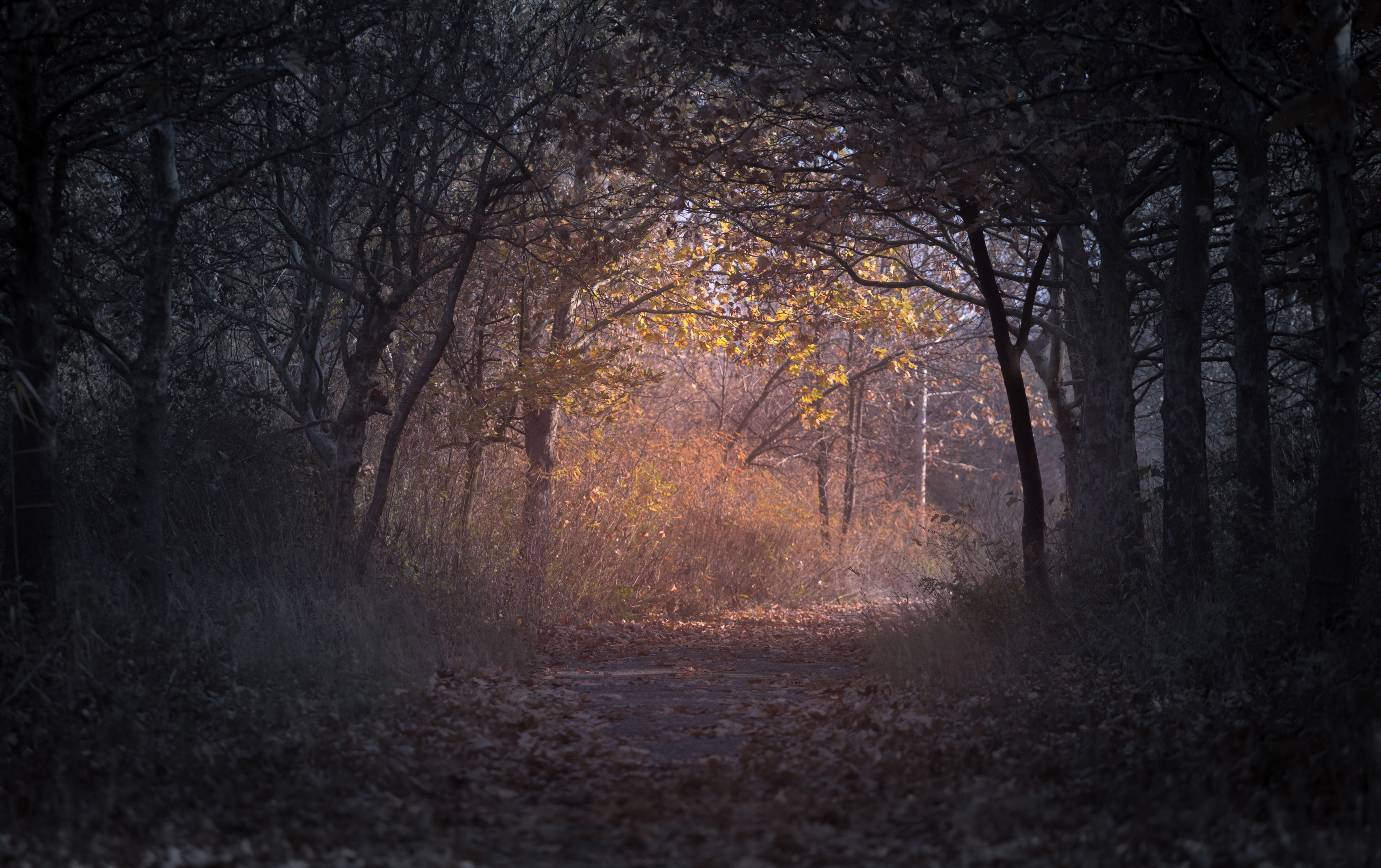 320x240 Trees Branch Pathway Dark Autumn Forest Backlit Apple Iphone Ipod Touch Galaxy Ace Hd 4k Wallpapers Images Backgrounds Photos And Pictures