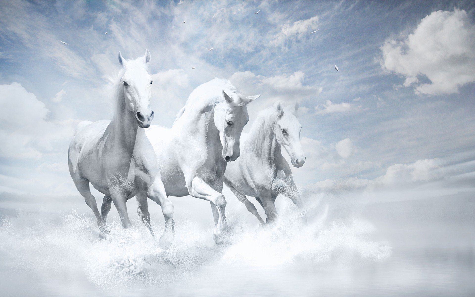 800x1280 White Horses Hd Nexus 7 Samsung Galaxy Tab 10 Note