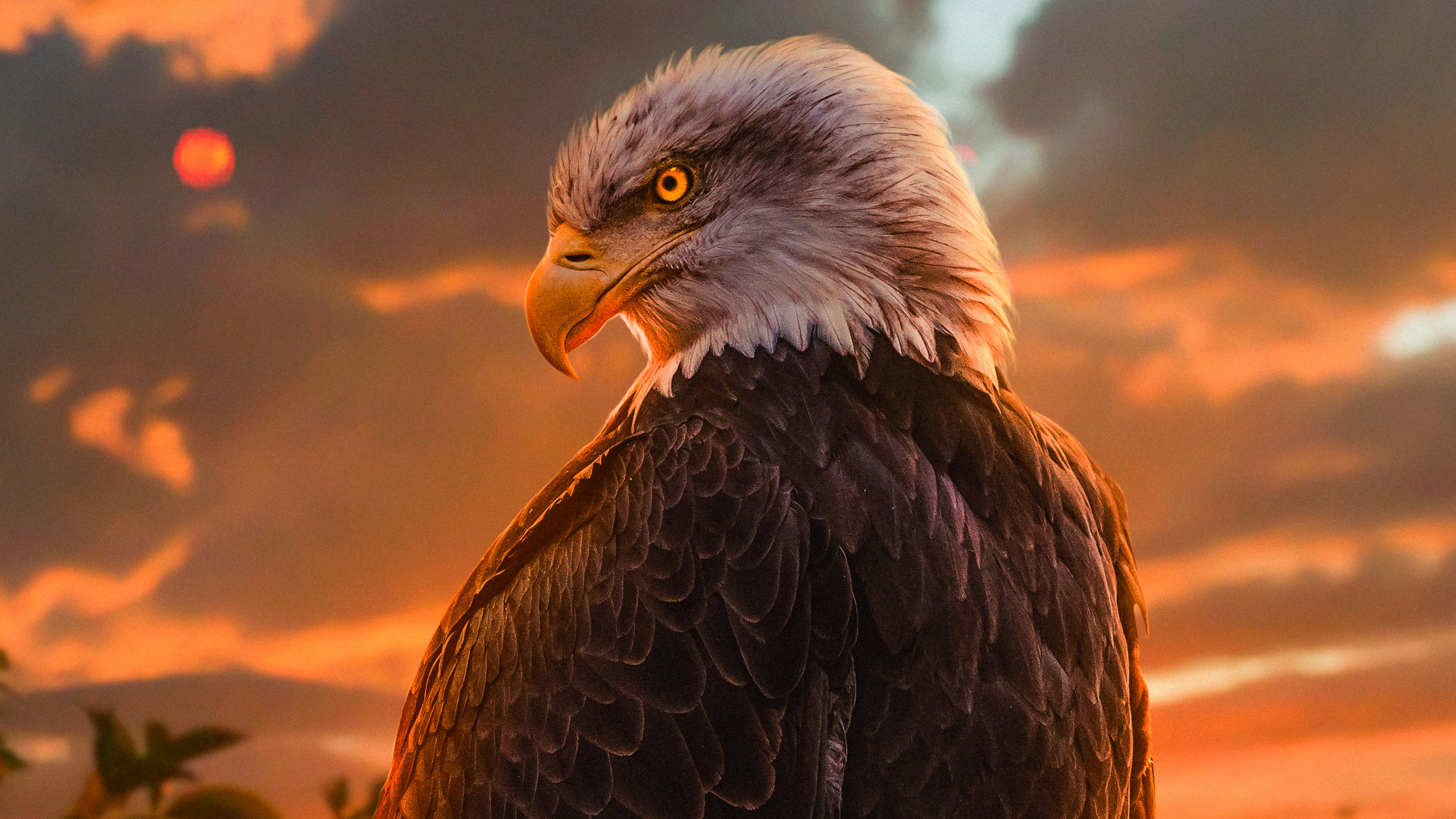 Wild Bald Eagle 4k, HD Birds, 4k Wallpapers, Images ...