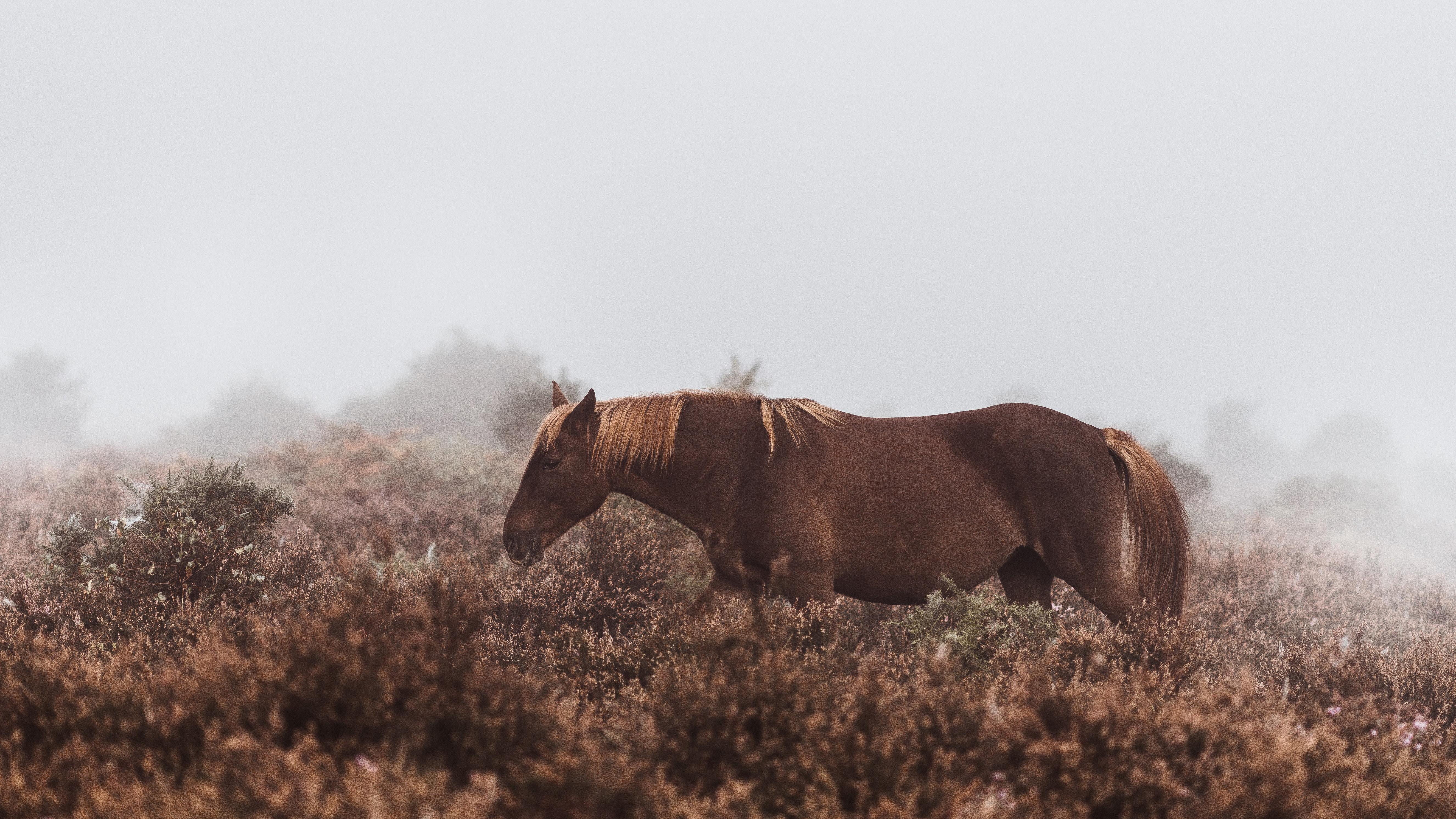 Wild Horse 5k, HD Animals, 4k
