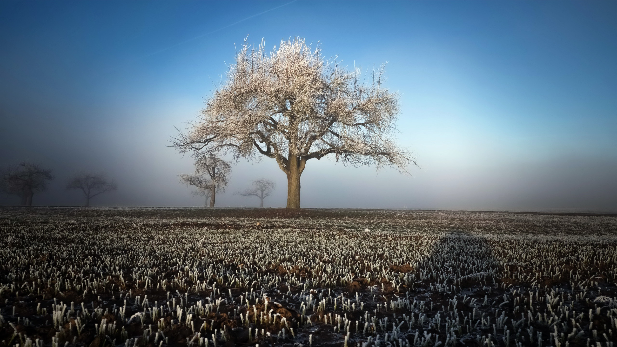 800x1280 Winter Field Landscape Trees Nexus 7 Samsung Galaxy