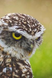 5k Bald Eagle