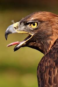 720x1280 Adler Raptor 4k