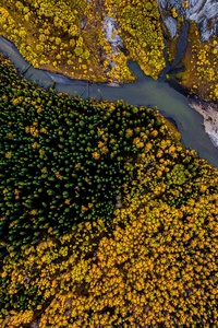 240x400 Aerial Photography Beauty In Nature Forest