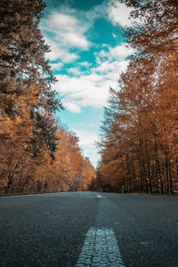 360x640 Alone Road Forest Autumn Golden Trees Ultra 4k