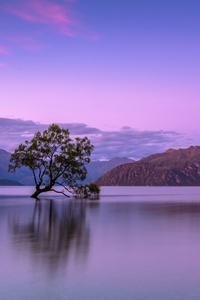 Alone Tree In Lake 5k