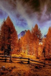 Alpine Mountains Autumn Forest Trees