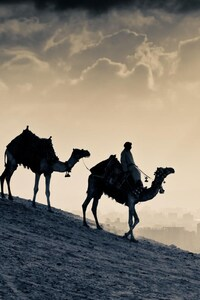 1440x2560 Arab People Camels