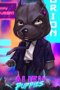 Assassin Pitbull