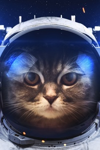 320x480 Astronaut Cat