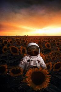 Astronaut In Sunflowers Field 4k