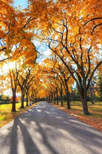 480x800 Autumn Alley Park