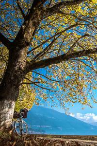 480x854 Autumn Cycle Sky Tree Leaves 4k 5k