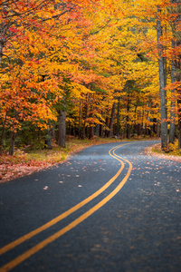 480x854 Autumn Drive Road 4k