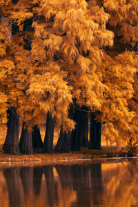 Autumn Fall Nature 4k