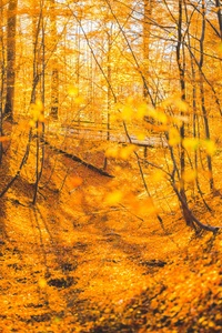1125x2436 Autumn Forest Trees 5k