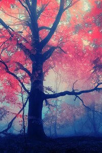 480x800 Autumn Forest