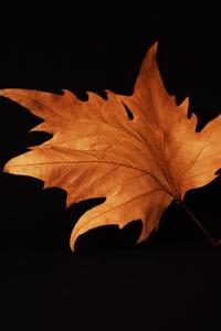 1440x2560 Autumn Leaf Black Background