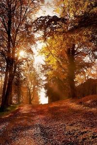 480x800 Autumn Leaf Trees Park Nature