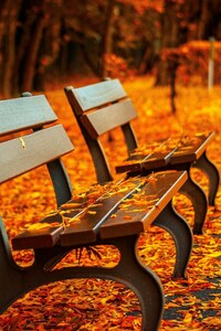 480x800 Autumn Leaves Bench