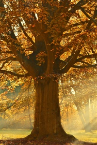 320x568 Autumn Rays Of Light Trees 5k