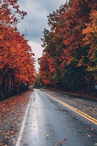240x400 Autumn Road Trees On Sides Fallen Leaves
