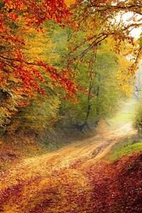 240x400 Autumn Road