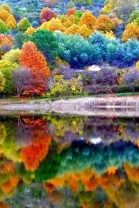 480x800 Autumn Scenery