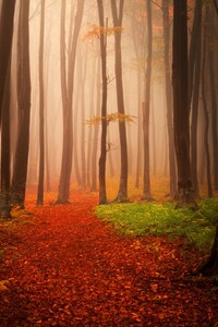 480x800 Autumn Starts Forest